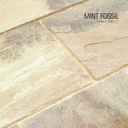 Mint Fossil